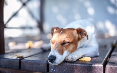 Seven Ways to Make Your Deck Safe for Children and Pets